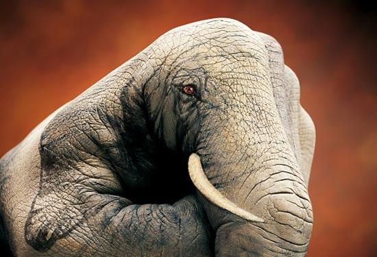 Guido Daniele - Elephant