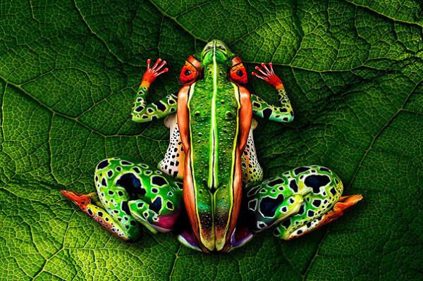Johannes Stoetter - Frog